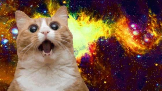 15-best-cat-memes-ever-meow--3283dd863e